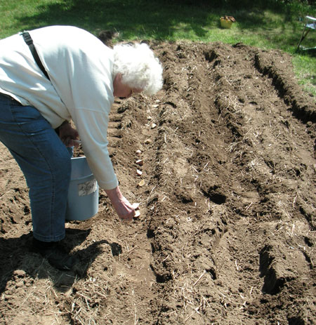 88 year old Mary Orff planting potatoes in Epsom NH